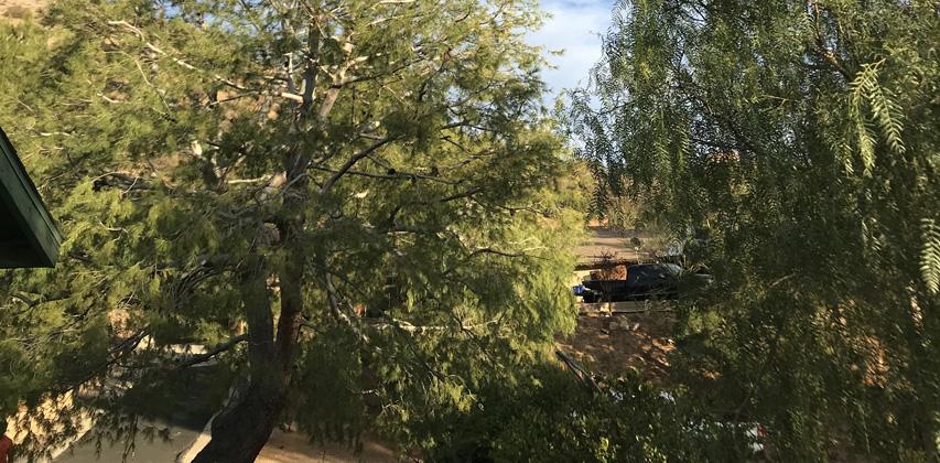Tree Pruning in San Fernando Valley CA   818-926-9322   Free